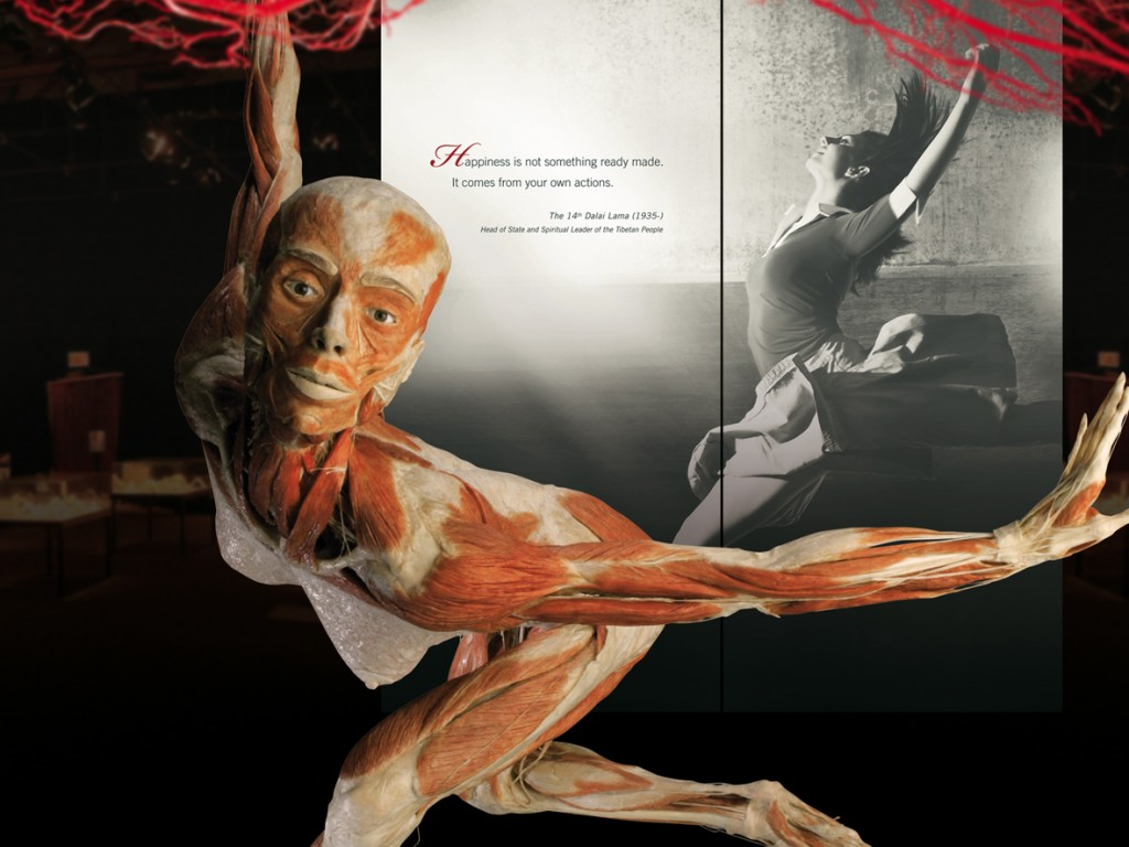 Copyright- Gunther von Hagens, Institute for Plastination, Heidelberg, Germany, www.bodyworlds.com